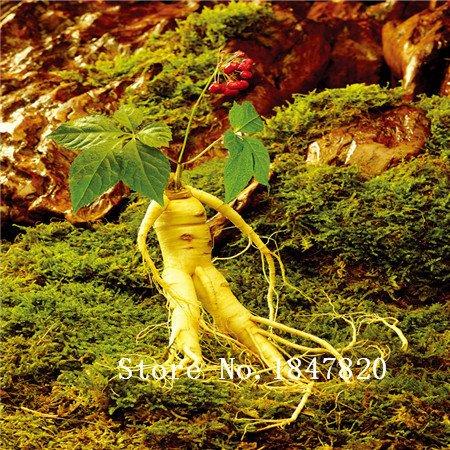 2016 Bonsai ginseng Graines 100pcs 10kinds mix Graines de fleurs Novel plantes pour jardin