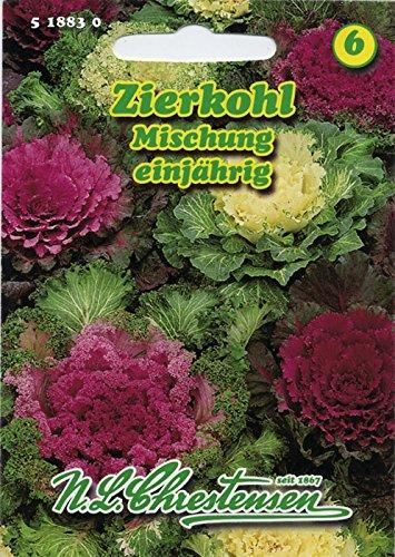 Zierkohl Mischung , einjährig, Interessant, nicht für Verzehr (Brassica oleracea)