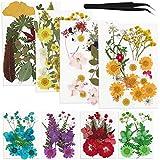 GUIFIER 142 Piezas de Flores y Hojas prensadas secas Reales, múltiples Flores secas Naturales para Manualidades, fabricación de Joyas de Resina, Decoraciones Florales, decoración del hogar