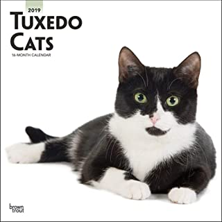 2019 Cats Tuxedo Wall Calendar, Cat Breeds by BrownTrout