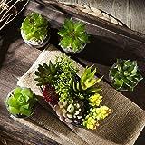 Zoom IMG-2 jobary set di 5 piante