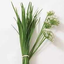 Best wild garlic seeds for sale Reviews