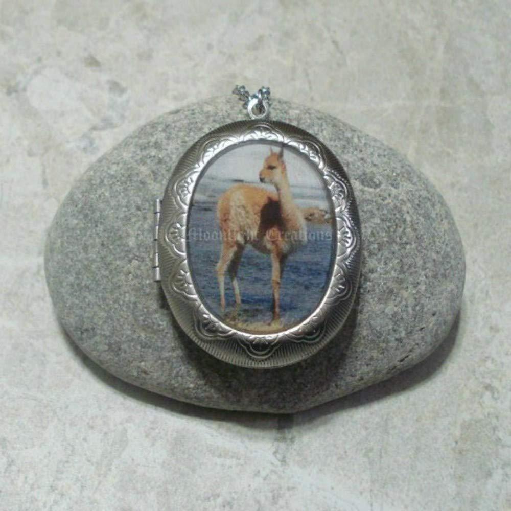 Baby Alpaca Rare Locket Pendant Steel Necklace El Paso Mall Stainless