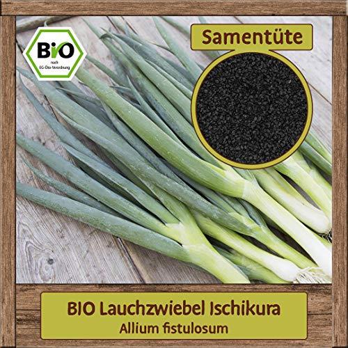 BIO Lauchzwiebel Samen Frühlingszwiebel Gemüsesamen Lauch (Allium fistulosum) winterhart