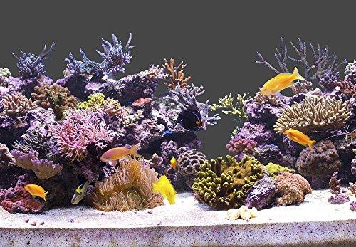 StickandShine 200 cm Aquarium Hintergrund Folie dunkelgrau 50 cm breite/höhe