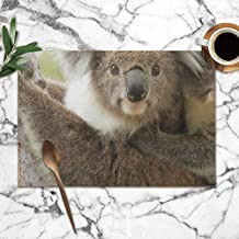 X-Large Female Koala Young Joey On Her Animals Wildlife Table Placemats for Dining Table,Washable Table Mats Heat-Resistant(12X18 Inch) Set of 6