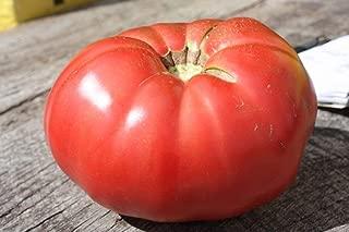 Best german pink heirloom tomato Reviews