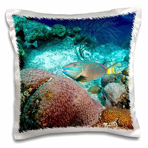 3dRose Kissenbezug, Motiv Stoplight Papageienfisch-Bonaire-Niederlande Antilles-Ca09 Pox0085-Pete Oxford, 40,6 x 40,6 cm