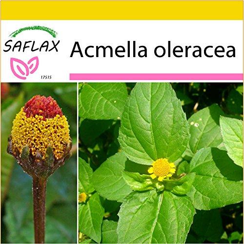 SAFLAX - Kräuter - Parakresse - 500 Samen - Acmella oleracea