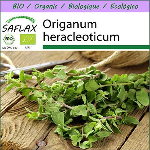 SAFLAX - BIO - Origan - 1500 graines - Origanum heracleoticum