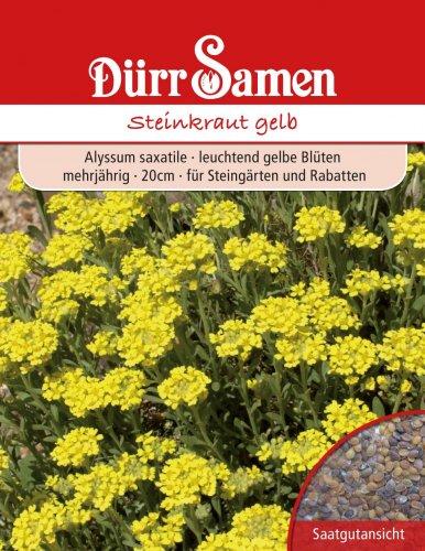 Dürr Samen 0734 Steinkraut gelb (Steinkrautsamen)