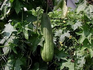 10 unidades//lote de semillas de lufa vegetal verde jard/Ã/n de semillas y plantas en casa org/Ã/¡nica 11.11 Promoci/Ã/³n grande ASTONISH SEEDS