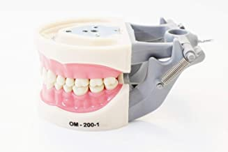 Best typodont for dental students Reviews