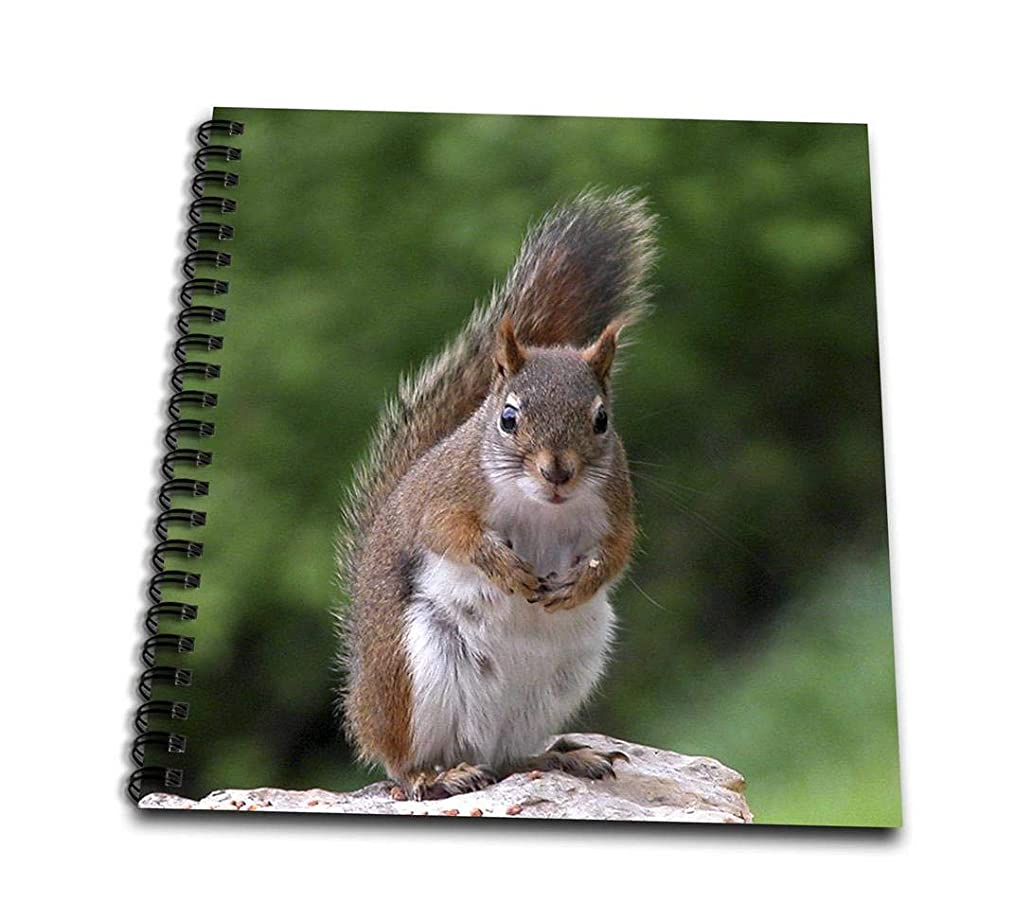 3dRose db_22427_2 Red Squirrel with Attitude-Memory Book, 12 by 12-Inch