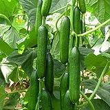 Cucumber Beit Alpha (60 seeds) Fresh Persian Flavor