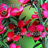 30pcs / bag Semillas raras Leptospermum scoparium de...
