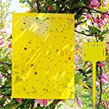 ALIGADO 50 Sheets Yellow Sticky Traps, Dual-Sided, 8x6 Inch, with Twist Ties and Plastic Holders, for Capture Insects Like Gnats, Flies, Aphids