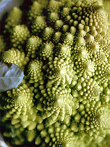 Romanesco Kohl (Brassica oleracea convar. botrytis var. botrytis) 150 Samen