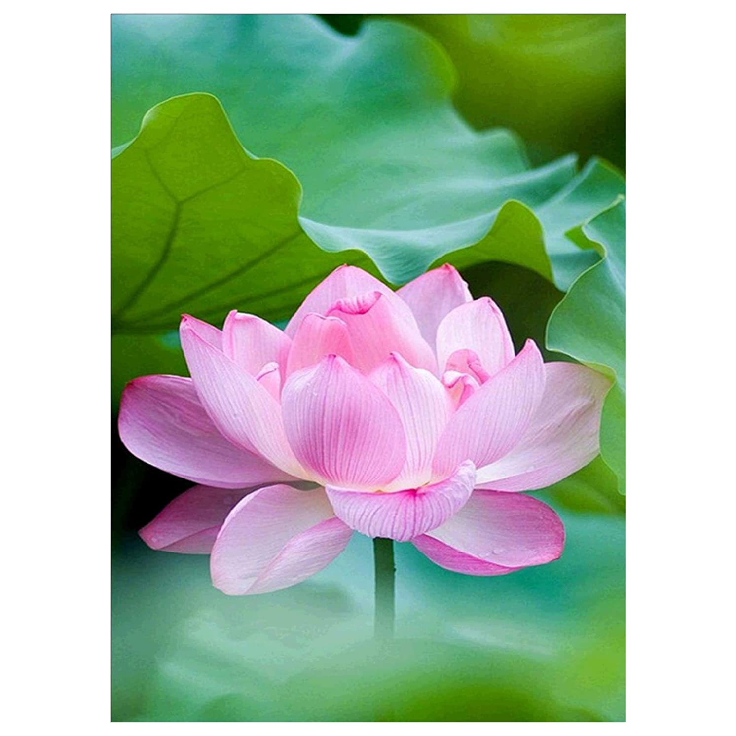DIY 5D Diamond Painting by Number Kit, Lotus Flower Square Diamond Embroidery Cross Stitch Arts Craft Supply Canvas Wall Decor