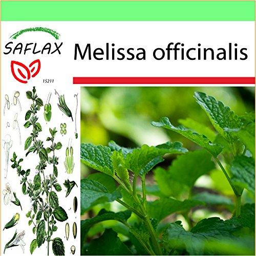 SAFLAX - Garden to Go - Erba limoncina - 150 semi - Melissa officinalis