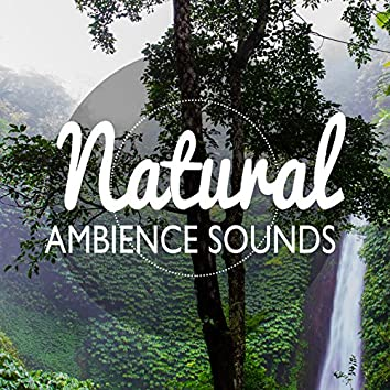 Natural Ambience Sounds
