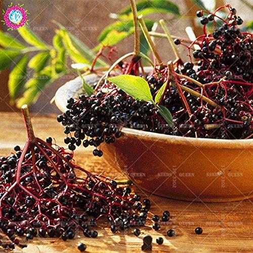 20 pcs/sac réel sureau graines graines de plantes potagères herbes médicinales vivaces en pot Maison et jardin 95% bonsai taux de germination 4