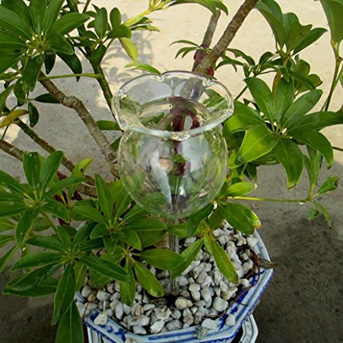 Hffan Automatische Bewässerungsvorrichtung Bewässerungskugeln Pflanzen Blume Bewässerung Ernährung Bunt Durstkugeln Werkzeuge Tiermodellierung Automatische Bewässerung(Rose)