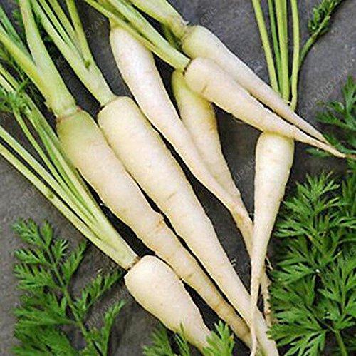 100 graines / Paquet Heirloom arc-en-Blanc Jaune Orange Violet Rouge carotte maraîchère Graines De délicieux légumes Bonsai Graines claires