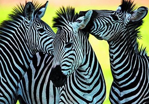 Dino Toys (DINR7) Puzzle Tre Zebre 500 Pz, Multicolore, Dino_502260