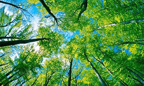 LWCX 3D-Decke Badezimmer Tapeten Benutzerdefinierte Wandbild Tapeten Blauen Himmel Und Grüne Bäume 3D-Decke Wallpaper 3D Fototapete 430X280CM