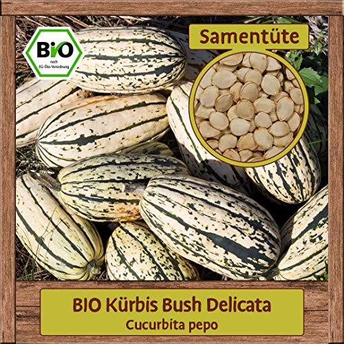 Samenliebe BIO Gemüse Samen Kürbis Bush Delicata (Cucurbita pepo) | BIO Kürbissamen Gemüsesamen | BIO Saatgut für 5 Pflanzen