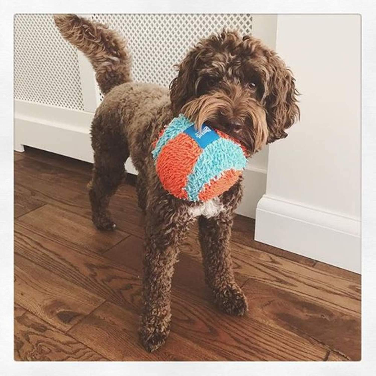 YQSMB Indoor Ball for Small Dogs and Puppies Dog Toy orange blueee One Size