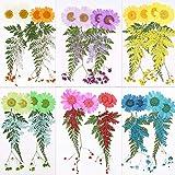 VINFUTUR 60pcs Flores Secas Naturales Prensadas Ramos Secos Pequeñas Surtidas Plantas para Decoración Tarjetas �lbum Recorte Scrapbooking Manualidad DIY