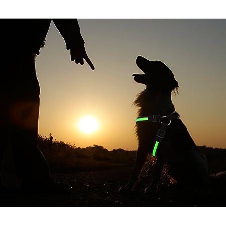 Precorn Led Hundegeschirr Leuchtgeschirr Brustgeschirr Elektronik