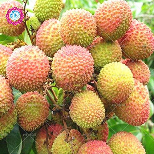 10 pcs litchi Seeds Accueil Jardinage extérieur des graines d'arbres fruitiers litchi Sementes Maison pot plante graines Bonsai
