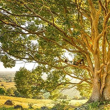 아름다운 나무