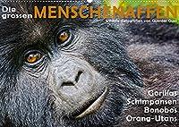 DIE GROSSEN MENSCHENAFFEN (Wandkalender 2022 DIN A2 quer): Gorillas, Schimpansen, Bonobos und Orang-Utans in ihren natuerlichen Lebensraeumen. (Monatskalender, 14 Seiten )