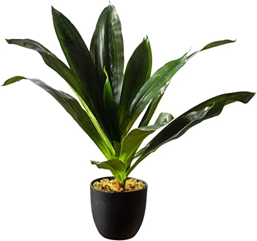 """wholesale Royal Imports Artificial Dracaena Plant, Tropical Life-Like Corn new arrival Stalk Tree, Dark Green in Decorative Planter - 19"""" discount Tall online sale"""