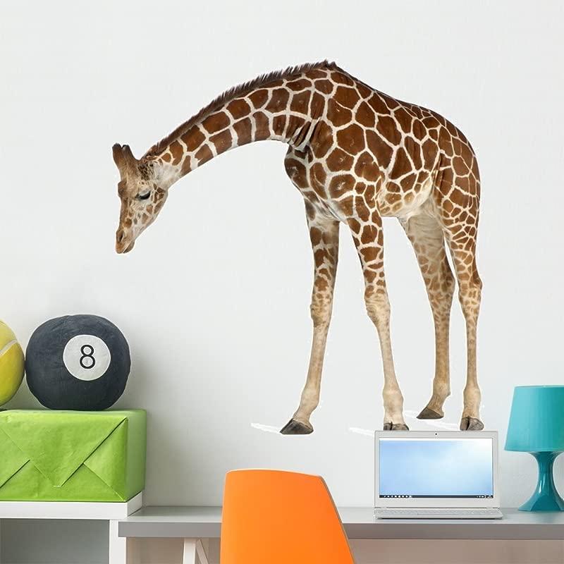 Wallmonkeys Reticulated Somali Giraffe Wall Decal Peel And Stick Animal Graphics 36 In W X 35 In H WM104740