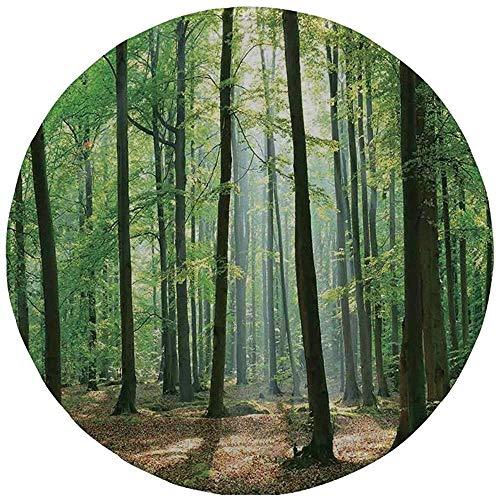 Rundes Mauspad, Wald, Morgensonnenstrahlen im natürlichen Frühlingswald vom Himmel in einem sonnigen Tag, Grün und Hellbraun