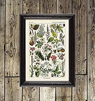 24.Decembre Dangerous Plants Poison Plant Art Herbal Design herb Wall Art Flower Print Botanic Gift Kitchen Poster Victorian Illustration 674