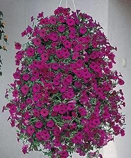 Petunia Seed Tidal Wave Purple Annual Seeds