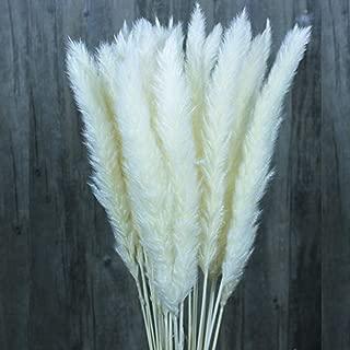 Color Life 55 Pcs Dried Pampas Grass,Phragmites Communis,Wedding Flower Bunch, for Home Decor,24