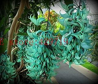 Hot Selling! 20 pcs Endangered Jade Vine 'Strongylodon Macrobotrys' Flower Seeds blue wisteria flowers tree seed for garden planting