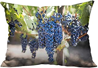 YouXianHome Decorative Couch Pillow Cases Purple Grapes Under The Grapevine Easy to Wash(Double-Sided Printing) 19.5x30 inch