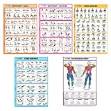 """SPORTAXIS-No-Equipment Laminated Home Workout Posters with Colored Illustrations- Men and Women Workout-Bodyweight Basic, Bodyweight Advanced, Yoga, Abs, Muscular Diagram Posters-18 x 27"""" (Pack of 5)"""