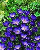 100pcs/bag ground cover crisantemo semi facile da coltivare semi di fiori per la casa giardino bonsai piante