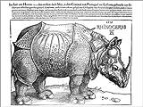 Poster 40 x 30 cm: Das Nashorn (Niederländisch) von