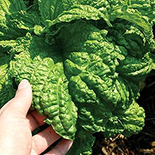 Park Seed Lettuce Leaf Basil Seeds