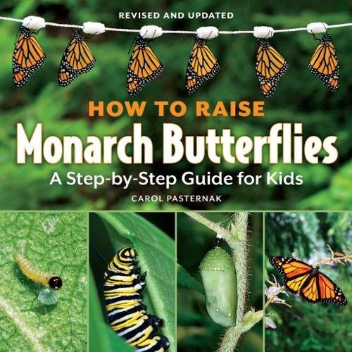 How To Raise Monarch Butterflies A Step By Step Guide For Kids How